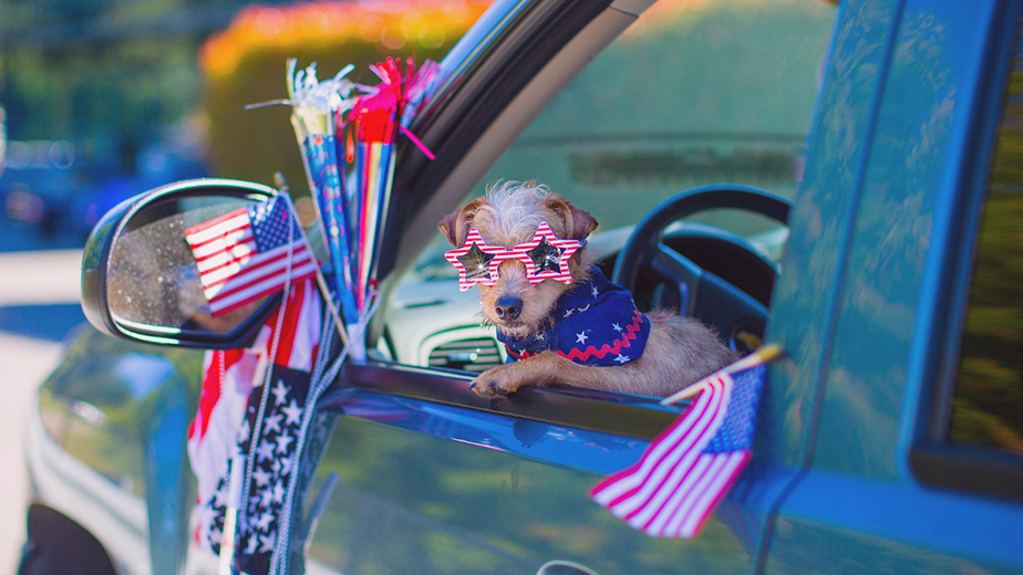 cute dog with sunglasses in a car