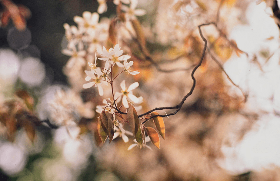 small white flowers with bokeh background