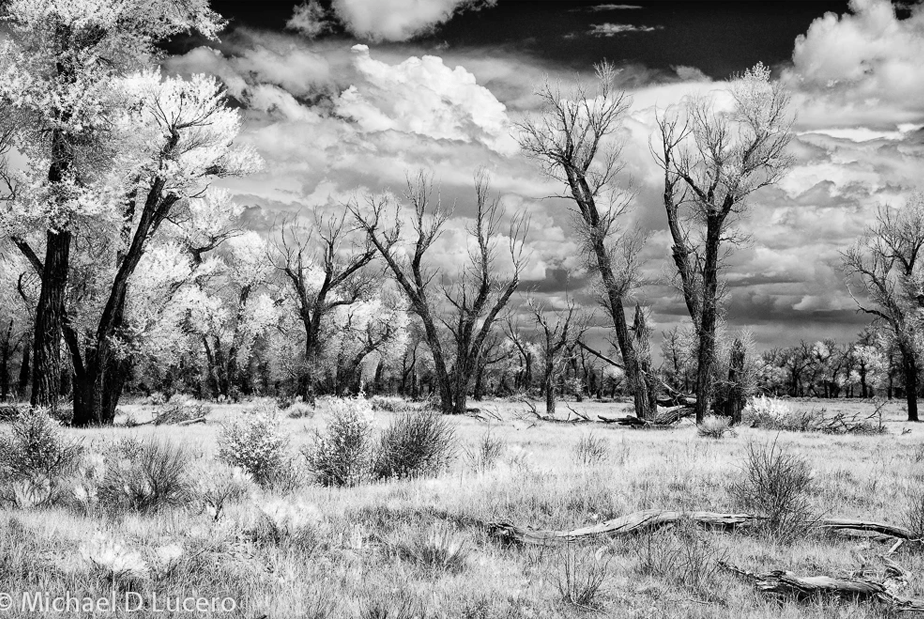 Beautiful Black & White Infrared Photography by Wix Photographer Michael D. Lucero