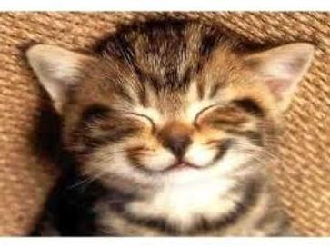 vet greystones vet blacklion vets pet dog cat happy have fun