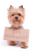 vet greystones vet blacklion vets pet dog cat pet health insurance