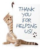 vet greystones vet blacklion vets pet dog cat neuter spay