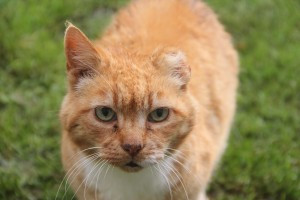 Ginga's story: How best to deal with the feral cat problem