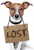 vet greystones vet blacklion vets pet dog cat mirochip identification