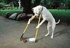 vet greystones vet blacklion vets pet dog cat pet behaviour training