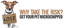 Vet greystones vet blacklion vets dog cat microchip identification