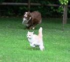vet greystones vet blacklion vets pet dog cat running arthritis