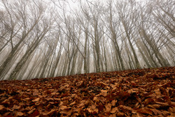 Parco Foreste Casentinesi