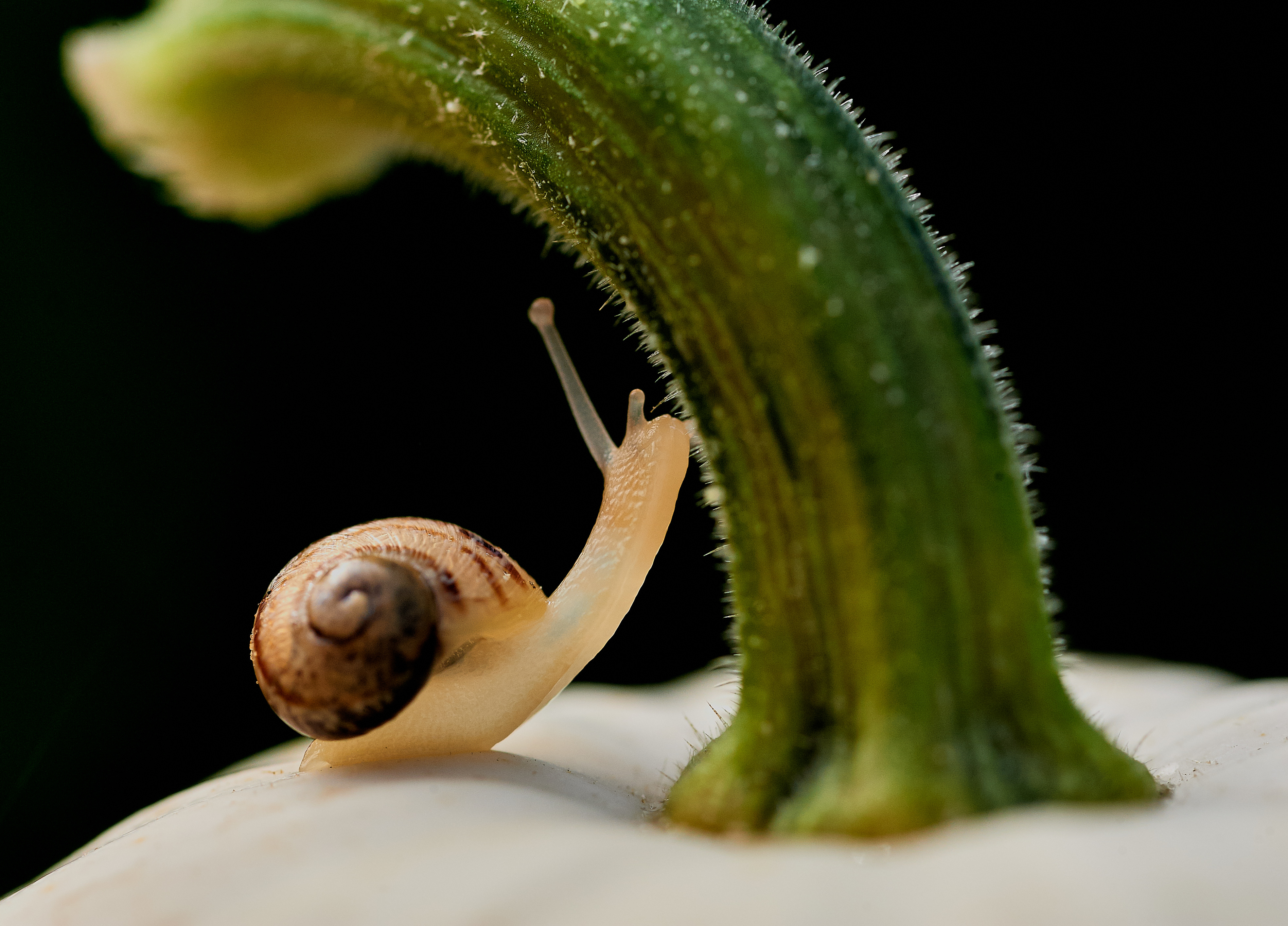 Snail