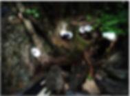 Alberi con occhi di pupazzo, simpatiche creature del bosco