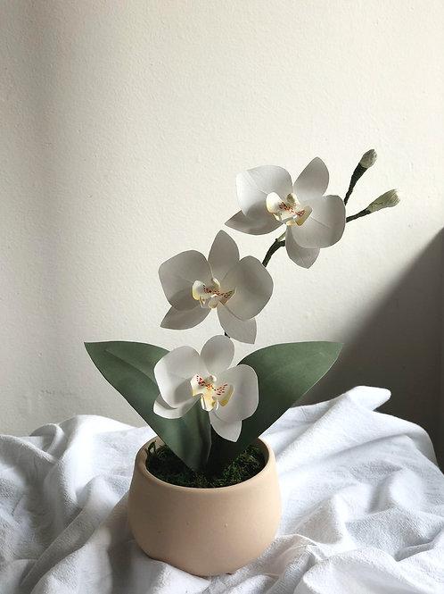 Jesslyn Orchids
