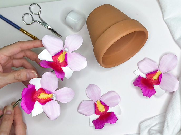 TFP Orchid workshop 2.jpg