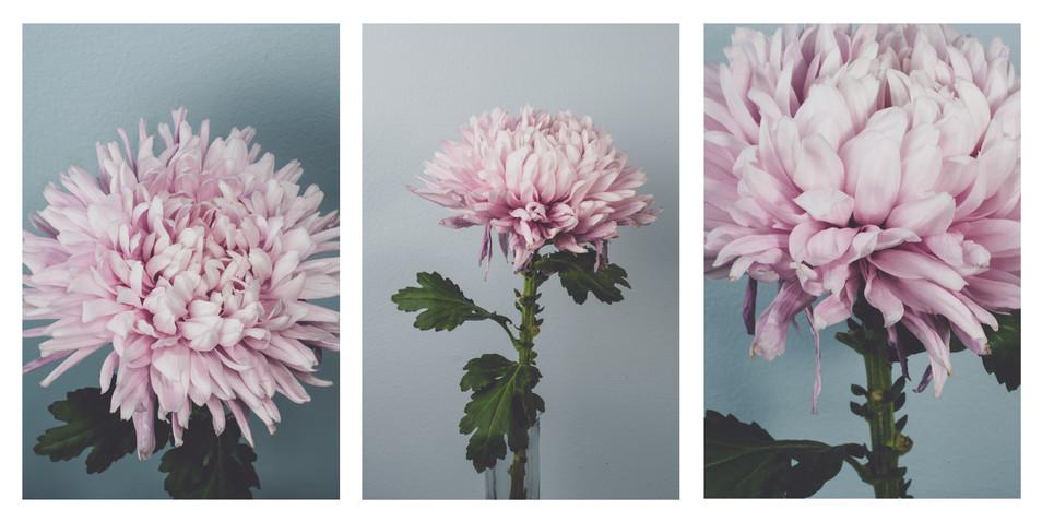 Purple Flower Triptych.jpg