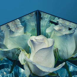 Vogue Rose