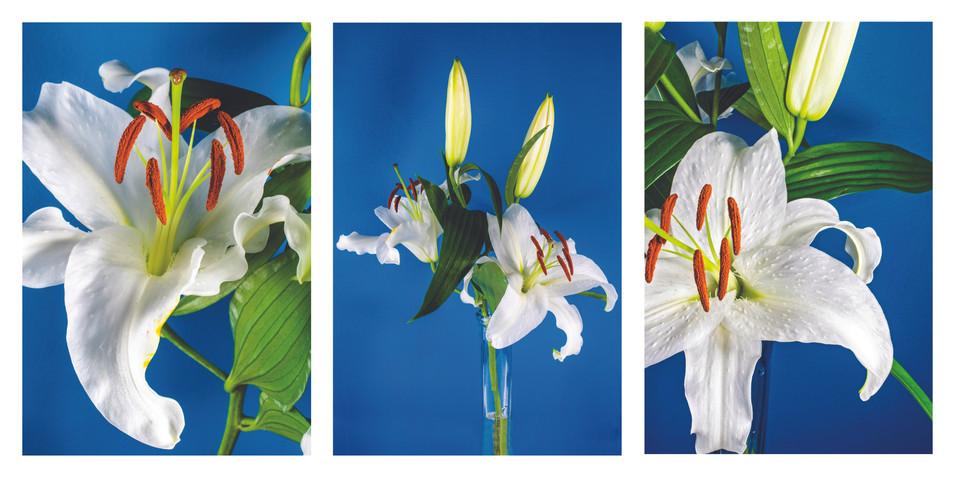 Lily Triptych.jpg