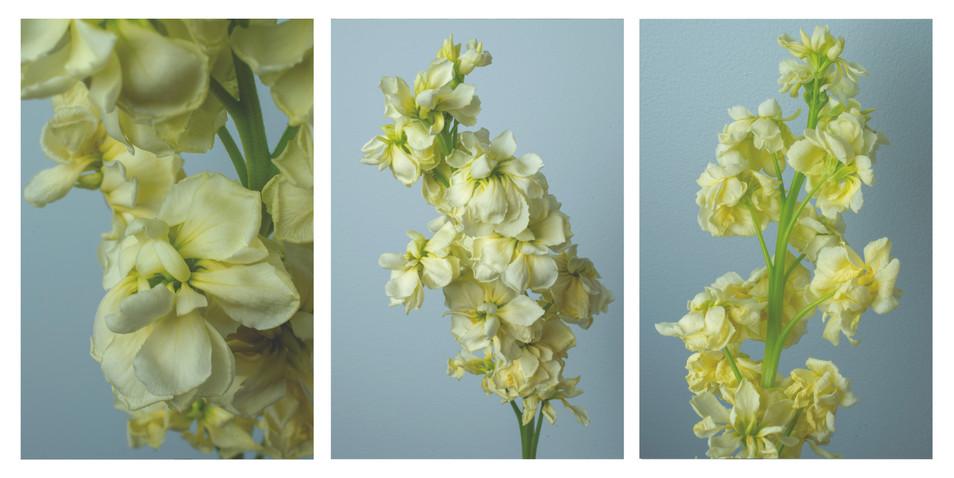 yellow flowers triptych.jpg
