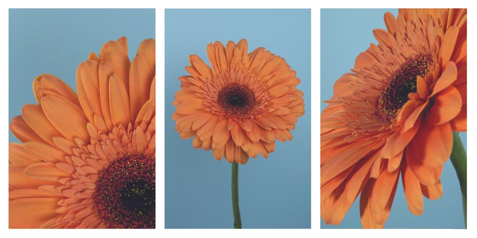 orange flower triptych.jpg