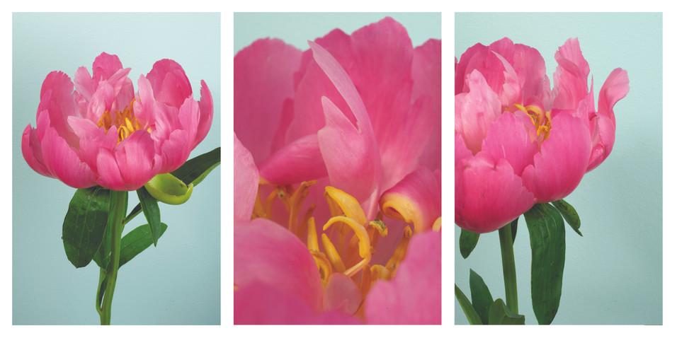 peony 1 triptych.jpg
