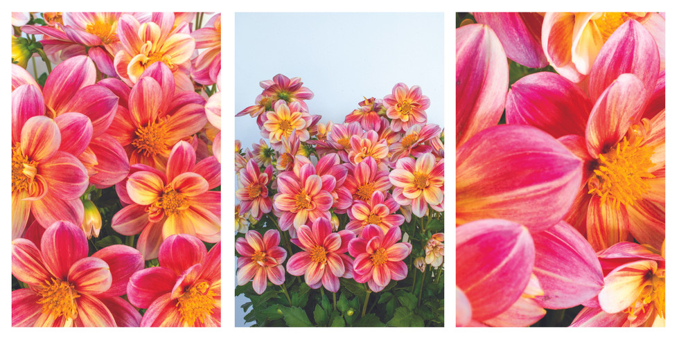 yellow and pink bunch.jpg