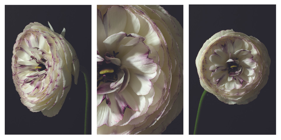 Carnation triptych copy.jpg