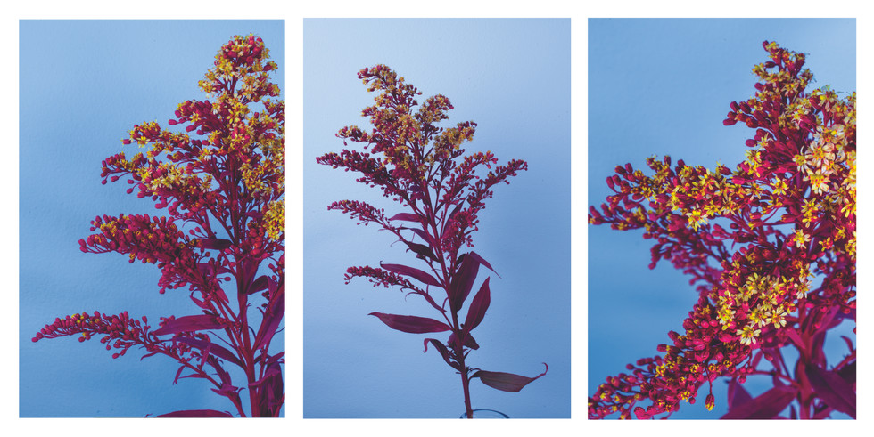 Small pink flowers triptych.jpg