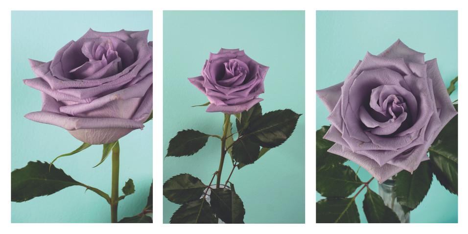 Rose Triptych.jpg