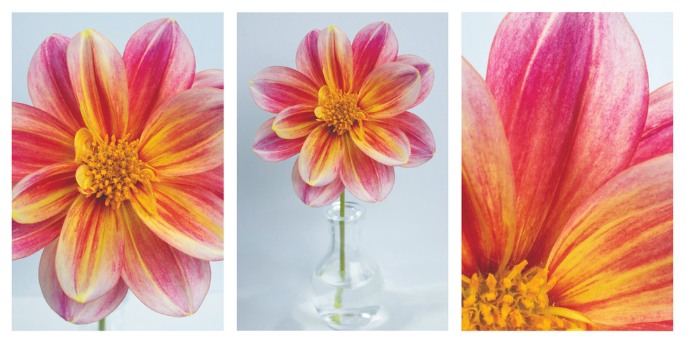 yellow and pink triptych.jpg