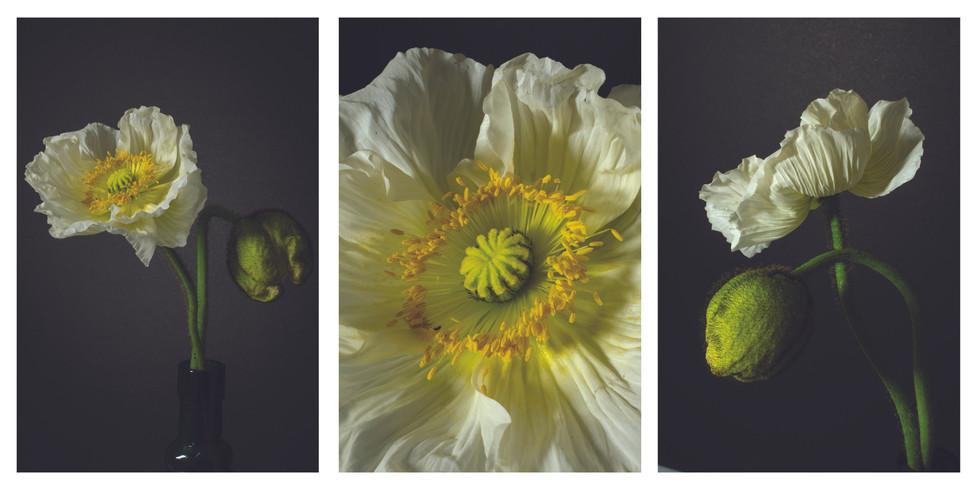 Poppy triptych.jpg