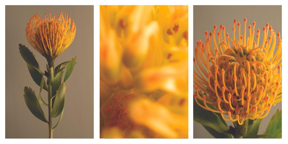 alien flower1 triptych.jpg