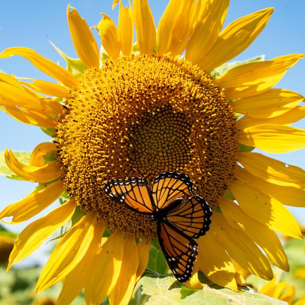Butterflies Paradise