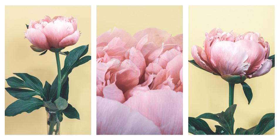 pale peony triptych.jpg