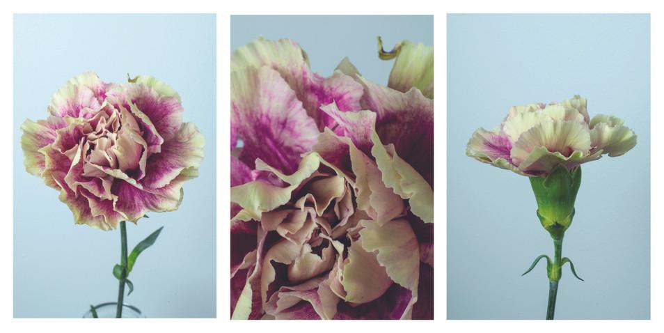 Carnation triptych.jpg