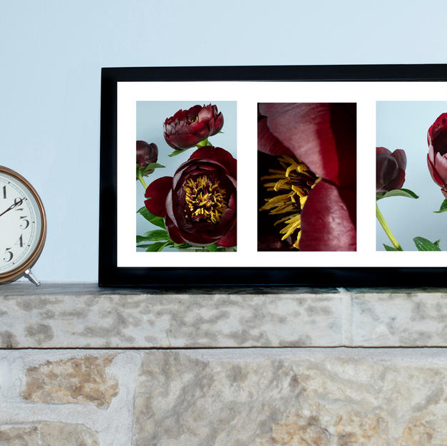 Rouge Peony Triptych