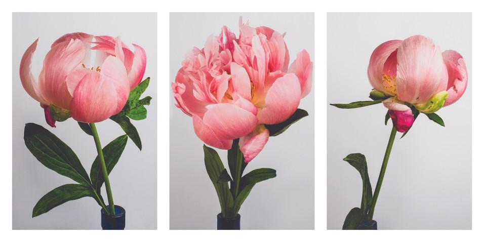 Peony Triptych.jpg