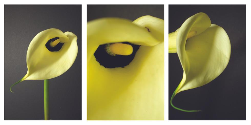 Callalily triptych.jpg