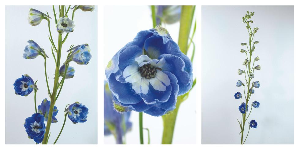 Blue Flowers triptych.jpg