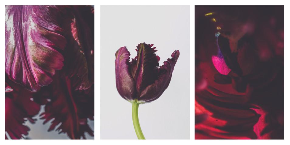dark tulip triptych.jpg