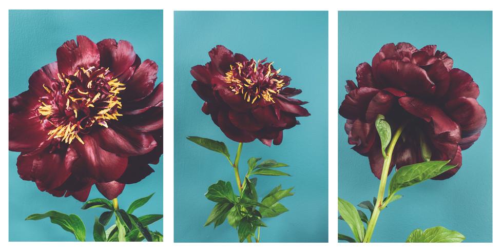 Peony triptych 2.jpg