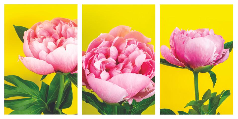 peony yellow background triptych.jpg