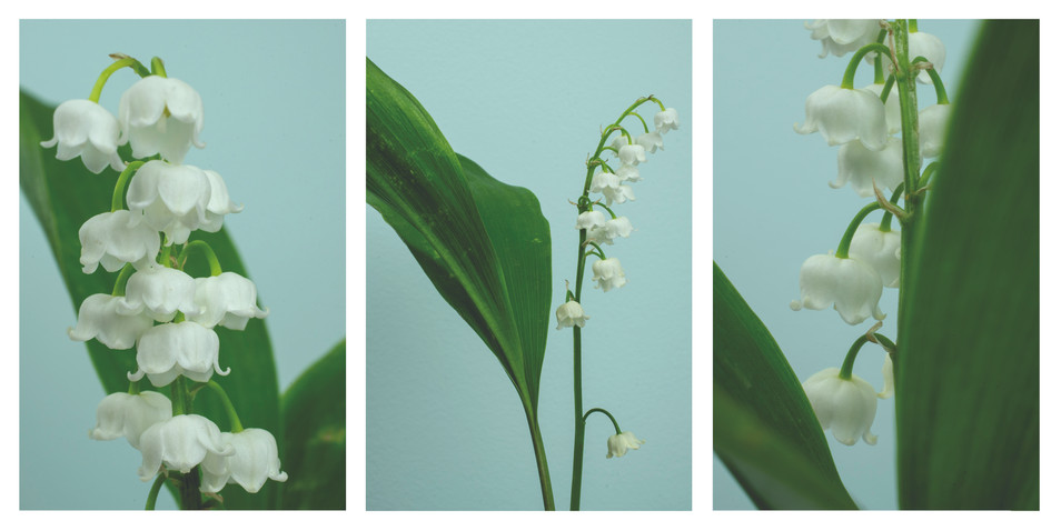 lily of the garden triptych.jpg