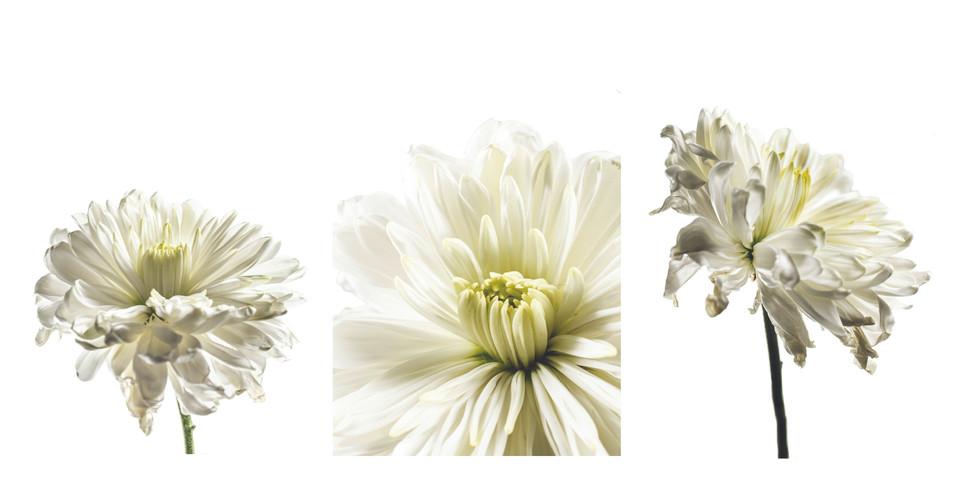 White Flower Triptych.jpg