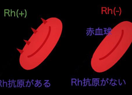 血液型のABO式血液型以外にもタイプが分かれるのはご存知ですか!?