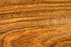 世界で一番重い木材は!?②