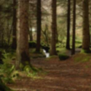 Enchanted forest2_edited_edited.jpg