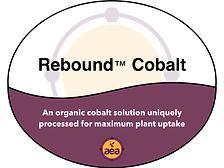 Rebound Cobalt.jpg