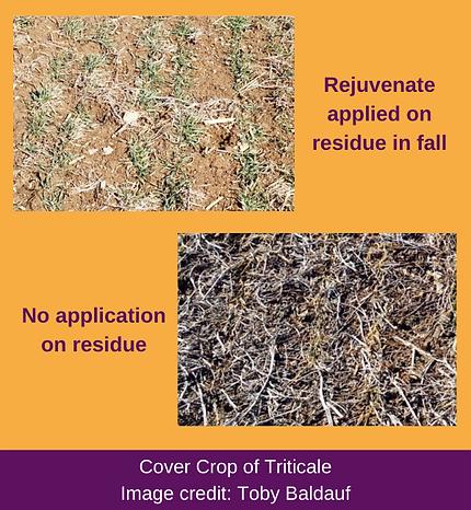 WEBSITE Toby Baldauf cover crop for soil primer.png