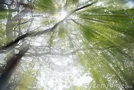 2012 Channeled Spiritual Healing Newsletter