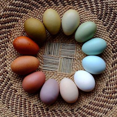 Huevos-de-colores (1).jpg