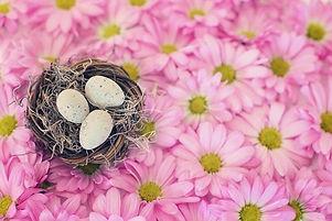 BirdsNestImageByJillWellingtonFromPixaba