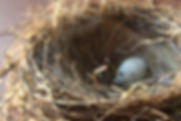 birds nest and white egg
